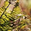ferns-in-the-garden-3