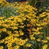 Flowerform