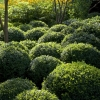 topiary-gallery