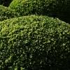 topiary-heading-5