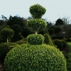 topiary-card-004