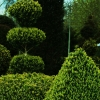 topiary-card-010