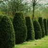 topiary-card-020-0-t