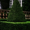 topiary-card-331-1t