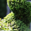 topiary-gallery-3