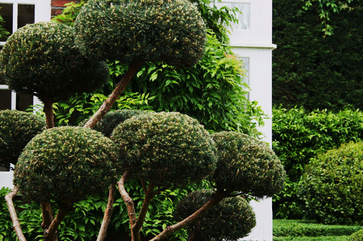 Topiary gallery garden and landscape designgarden and for Topiary garden designs